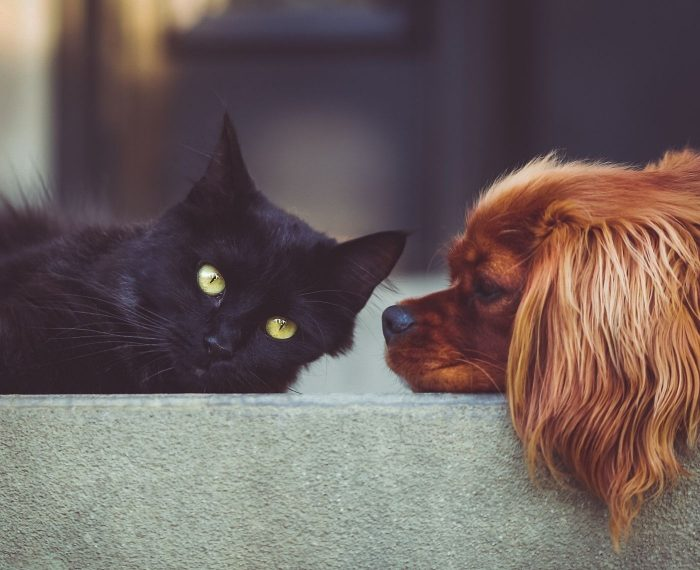 When Pets Are Victims, Too